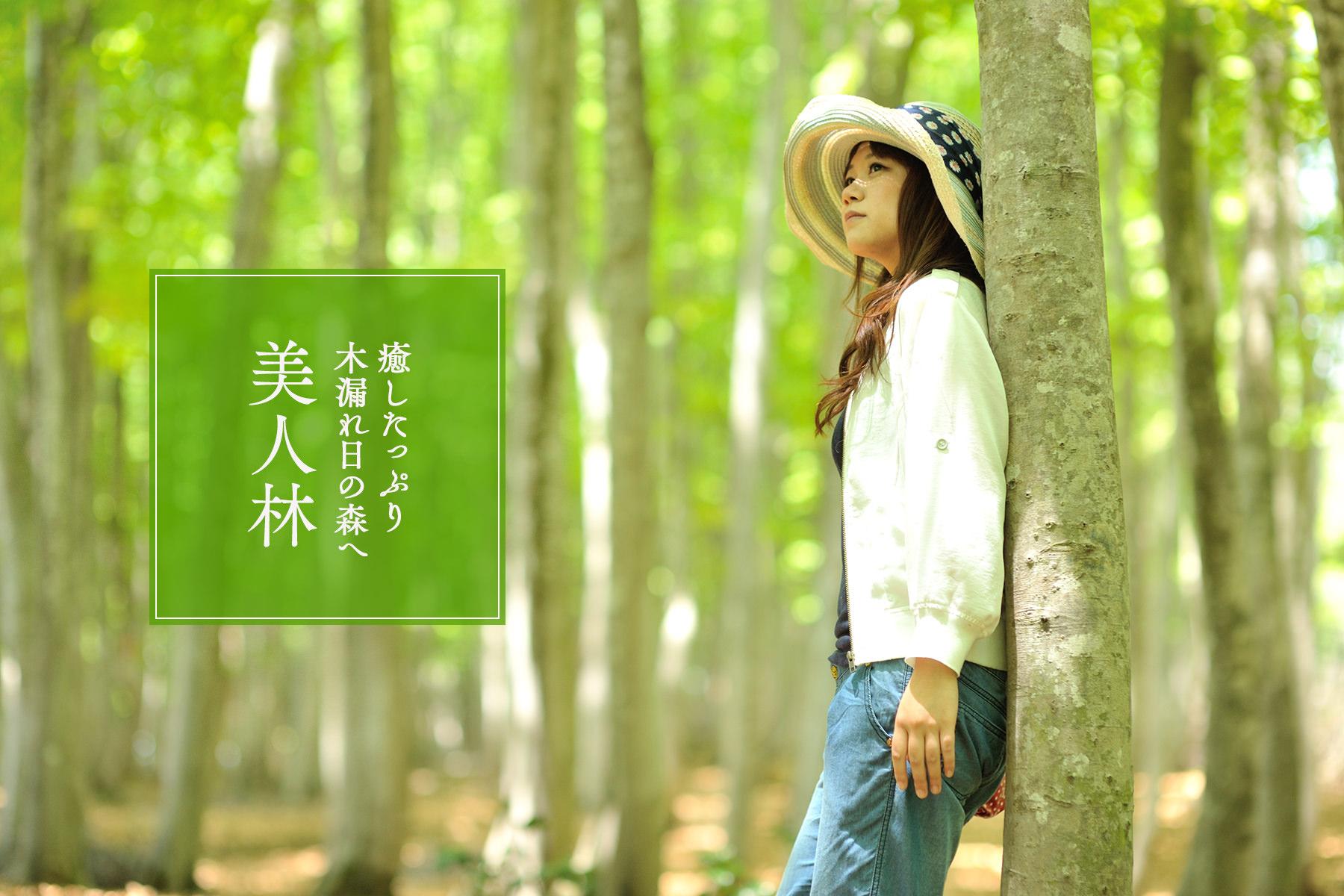 〈美人林〉 癒したっぷり木漏れ日の森へ