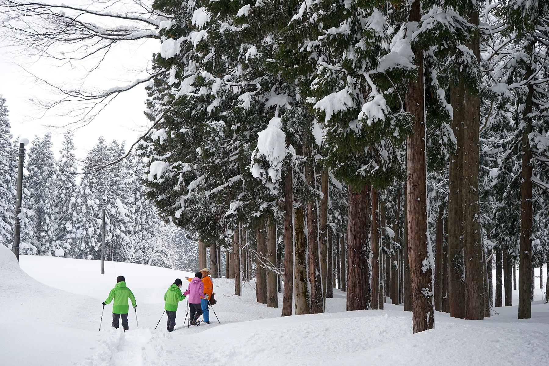 冬-4雪の美人林