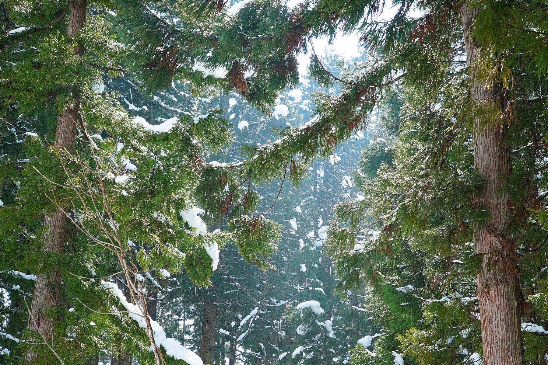 冬-5 雪の美人林
