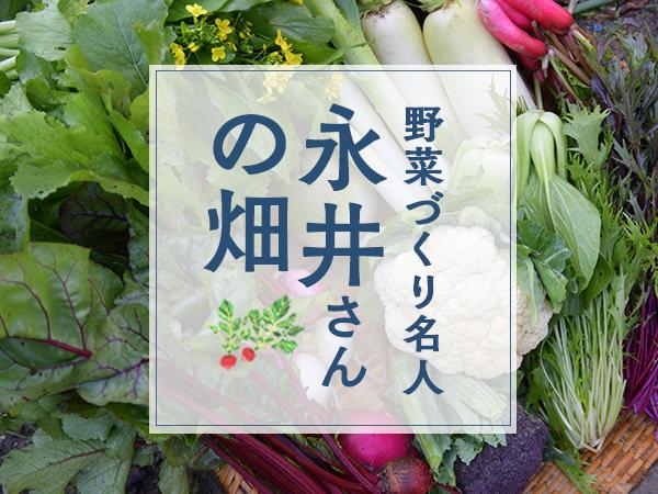 野菜づくり名人  永井さんの畑